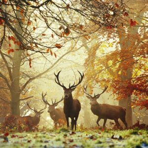 Buy HEYE Stags (1000 Piece Jigsaw Puzzle) and other great jigsaw puzzles only at Jigsaw Nation